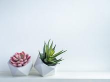 Cactus Pot. Concrete Pot. Mode...