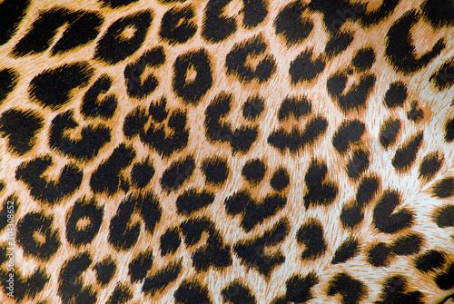 Fototapeta closeup of the leopard print fabric texture obraz