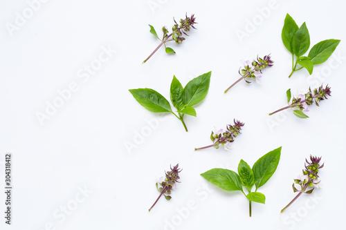 Fotomural Fresh sweet basil leaves with  flower on white background.