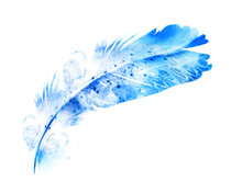 Watercolor Feather On White