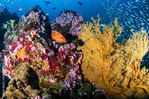 Foto auf AluDibond Riff A beautiful, colorful tropical coral reef in Thailand's Similan Islands