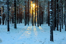 The Sun Shines Through The Tre...