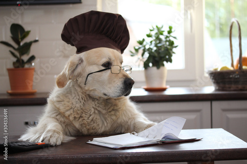 Obraz Clever dog wearing glasses. Golden retriever at the table with  calculator and writing-book - fototapety do salonu