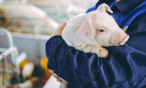 Foto pig farm industry farming hog barn pork