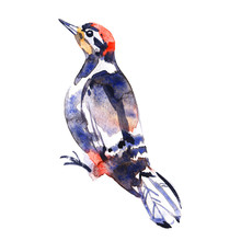 Watercolor Illustration Of A B...
