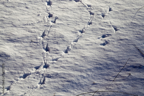 snow with traces Canvas Print