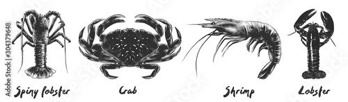 Vector engraved vintage style illustrations of spiny lobster, crab, shrimp, lobster for menu, logo, decoration and emblem Wallpaper Mural