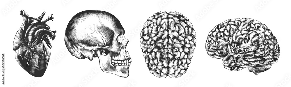 Fototapeta Vector engraved style illustrations for posters, decoration and logo. Hand drawn sketch of skull, heart and brain in monochrome isolated on white background. Detailed vintage woodcut style drawing.