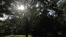 Pan Of Sunshine Peering Through Lush Trees In A Park In Late Summer.