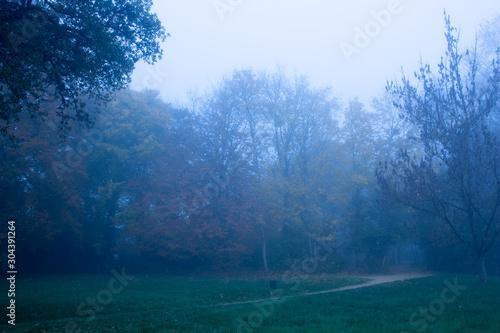 Fototapeta arbre de foret brouillard obraz na płótnie