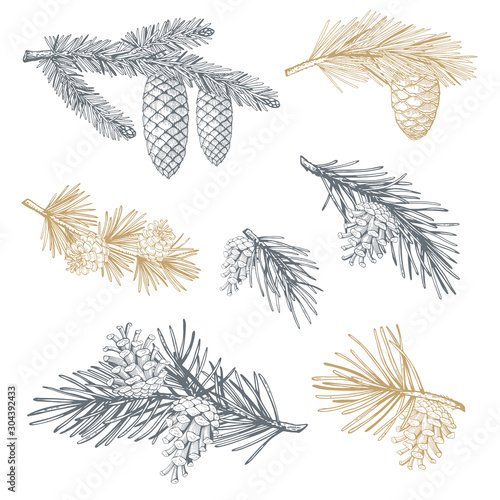 Obraz na płótnie Hand drawn set with pine cones and branches. Vector illustrations