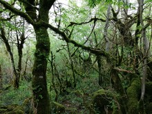 Jungle In Georgia