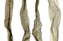 Snake Molt Skin Isolated