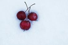 Ripe Winter Juicy Mini Apples ...