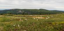 Early Morning Krkonose Mountains Scenery From Kamenna Studanka Stream Bellow Vysoka Plan Hill Summit In Czech Republic