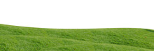 Green Grass Field Isolated On White Background With Clipping Path.