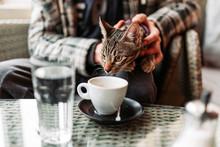 Striped Cat In Pet Friendly Ca...