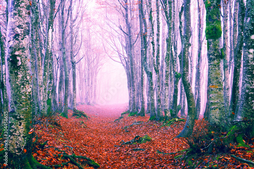 Foto auf AluDibond Flieder Enchanted forest path at fall season - Beech woods in winter morning mist - Picturesque image of trees on an autumn day