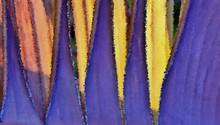 Close Up Of A Dried Up Banana Leaf