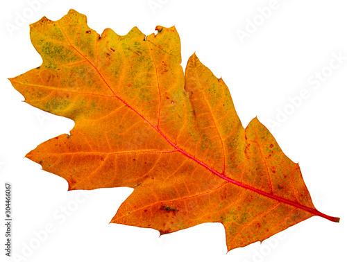 Gran foglia colorata verde, giallo, arancione su sfondo bianco Fototapet