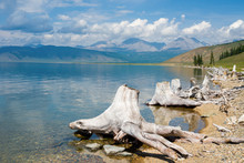 Stumps On The Shore Of Lake Ho...