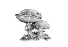 Amanita Muscaria Black And White Graphic Watercolor Illustration. Close Up Forest Toxic Mushroom Image.  Poison Amanita Toadstool With Moss Isolated On White Background.