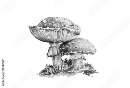 Amanita muscaria black and white graphic watercolor illustration Wallpaper Mural