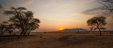Fototapeta Sawanna - Weites Grasland im Sonnenuntergang mit Termitenhügel in Namibia, Afrika