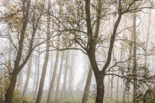 Photo arbre de foret brouillard