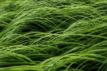 View of lush green grass blades