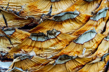 Close Up View Of Palm Tree Bark