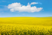 Landscape Overlooking Yellow R...
