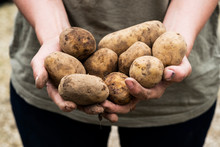 View Of Person Holding Potatoes