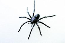 Decorative Big Black Spider On A White Background