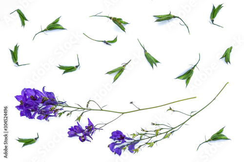 Isolated Aconitum on a white background Canvas Print