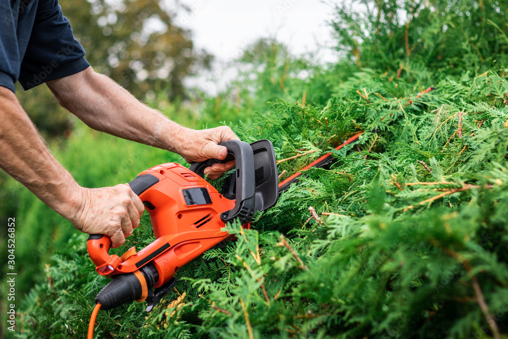 Fototapety, obrazy: Gardener cutting bush by hedge trimmer in garden