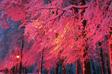 Fototapeta Zima evening park after snowfall