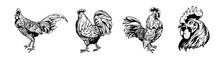 Rooster Set Illustration