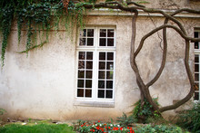 Ancient Building With Large Vintage Windows And Large Ivy Shoots Curl The Walls