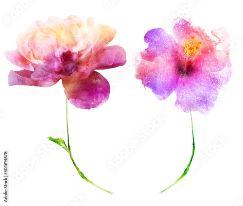 Watercolor flowers , isolated on white background - 304614678