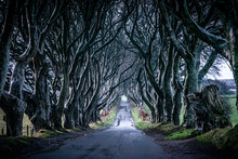 The Dark Hedges In Northern Ir...