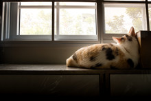 Lonely Cat Lying On The Window...