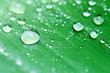 water drops on green leaf, purity nature background