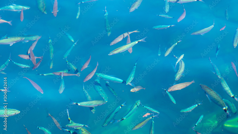 Fish in the blue water of the sea as a background