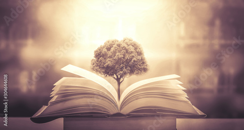The concept of education by planting a tree of knowledge in the opening of an old book in the library and the magical magic of light that flies to the destination of success Fototapet