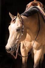 Western Horse Portrait