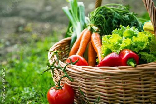 Fotografía Fresh organic vegetables basket freshly harvested from the garden