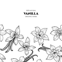 Vector Frame With Vanilla Flowers And Pods. Hand Drawn. Vintage Style