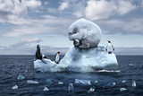 Fototapeta Zwierzęta - polar bear sits on a melting glacier