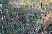 The Cobwebs Between The Dry Gr...